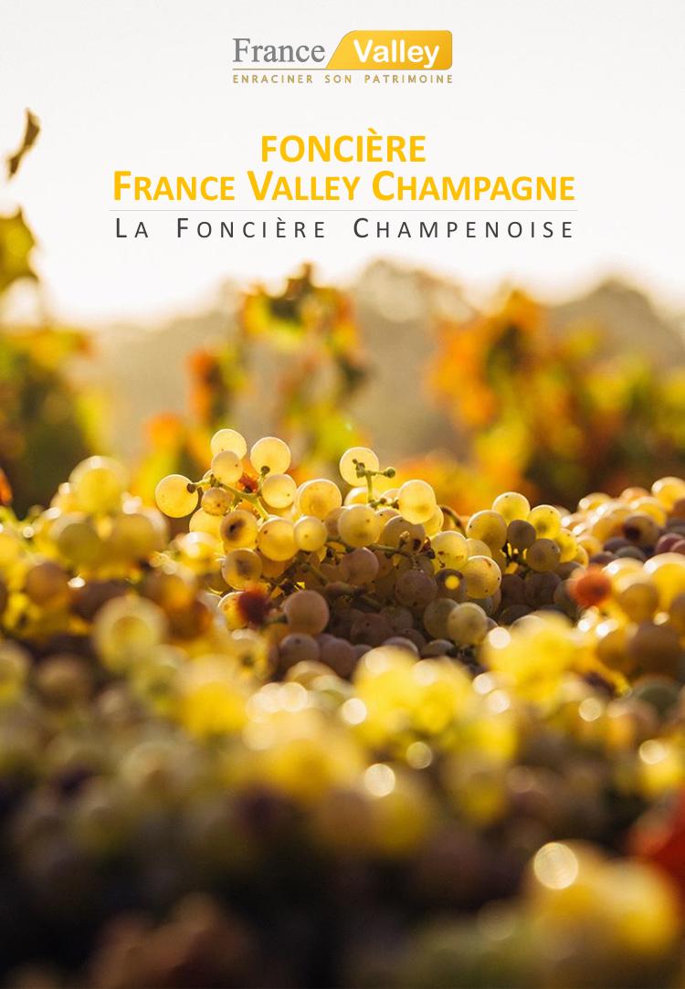 Objectif 7 % / an avec la vigne en Champagne