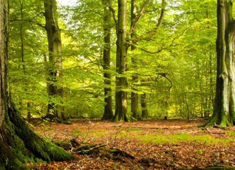 Diversifier son patrimoine en investissant dans des forets, via un GFF (Groupement Foncier Forestier)
